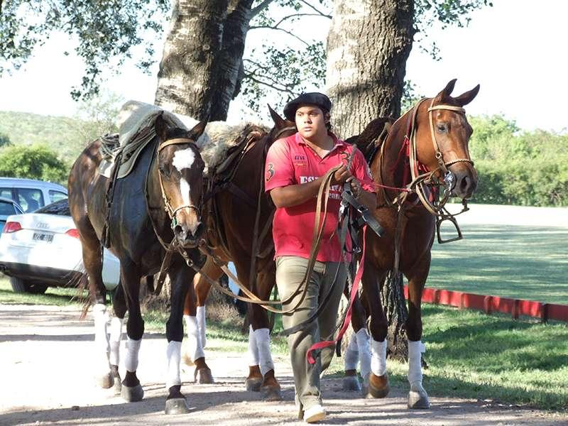 Peticero Argentino Polofarm Argentina