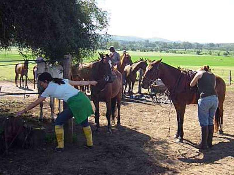 Tägliche Pferdepflege auf der Polofarm