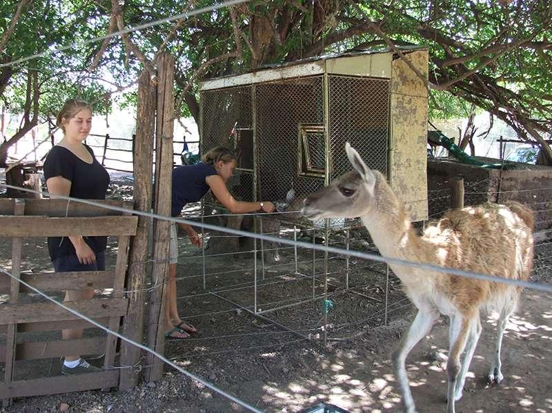 Freiwillige helfen mit den Tieren