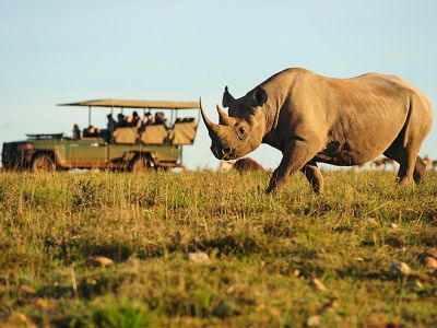 Big game photo safari South Africa