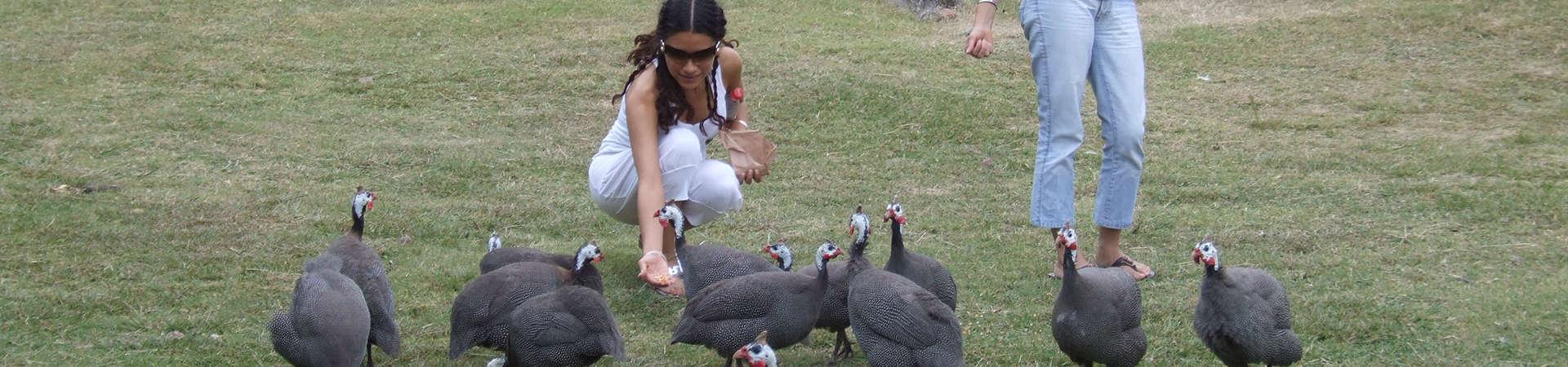 Argentinien Tierpark Fasane füttern