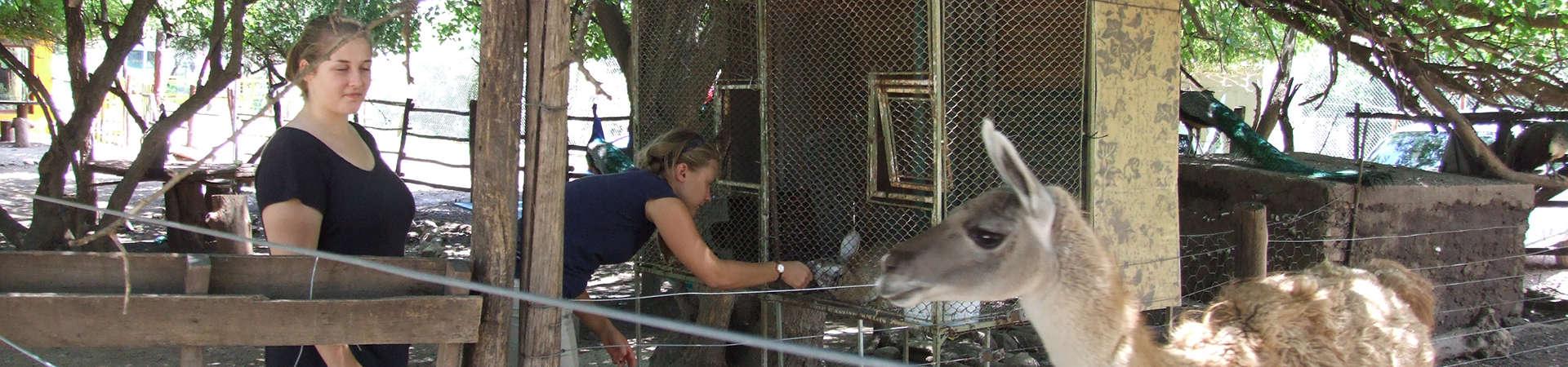 Argentinien Tierpark Volunteers Tierfütterung