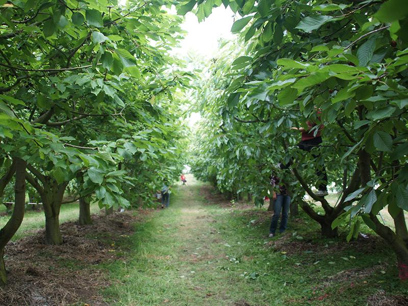 Plantage in Neuseeland